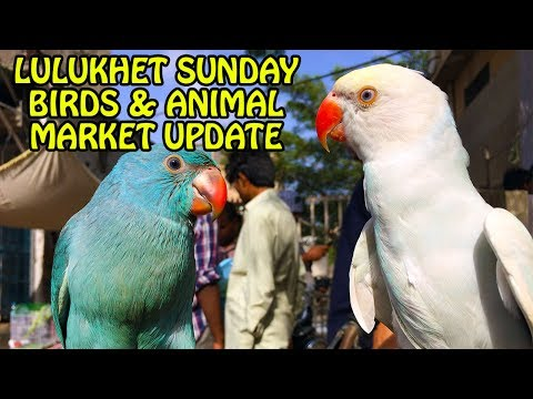 Lalukhet Sunday Birds and Animals Market Update | Video in Urdu/Hindi