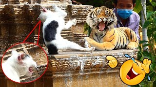 Real Cat Is Terrified By Fake Tiger Prank Funny Video 2021_ Try Not To Laugh Funny Cat Reaction