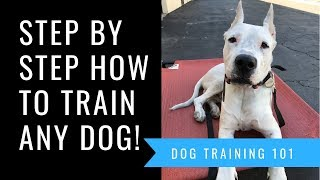 Dog Training 101 Step by Step How To Train A Dog Basic Obedience Including Sit, Down & Come