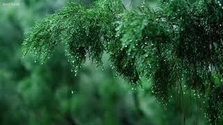 Nhạc Piano Nhẹ Nhàng Cùng Tiếng Mưa Rơi Giúp Giãm Stress  Relaxing Music & Soft Rain Sounds