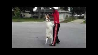 Human & Dog Aggressive Revan Part 1 | Majors Academy Dog Training And Rehabilitation