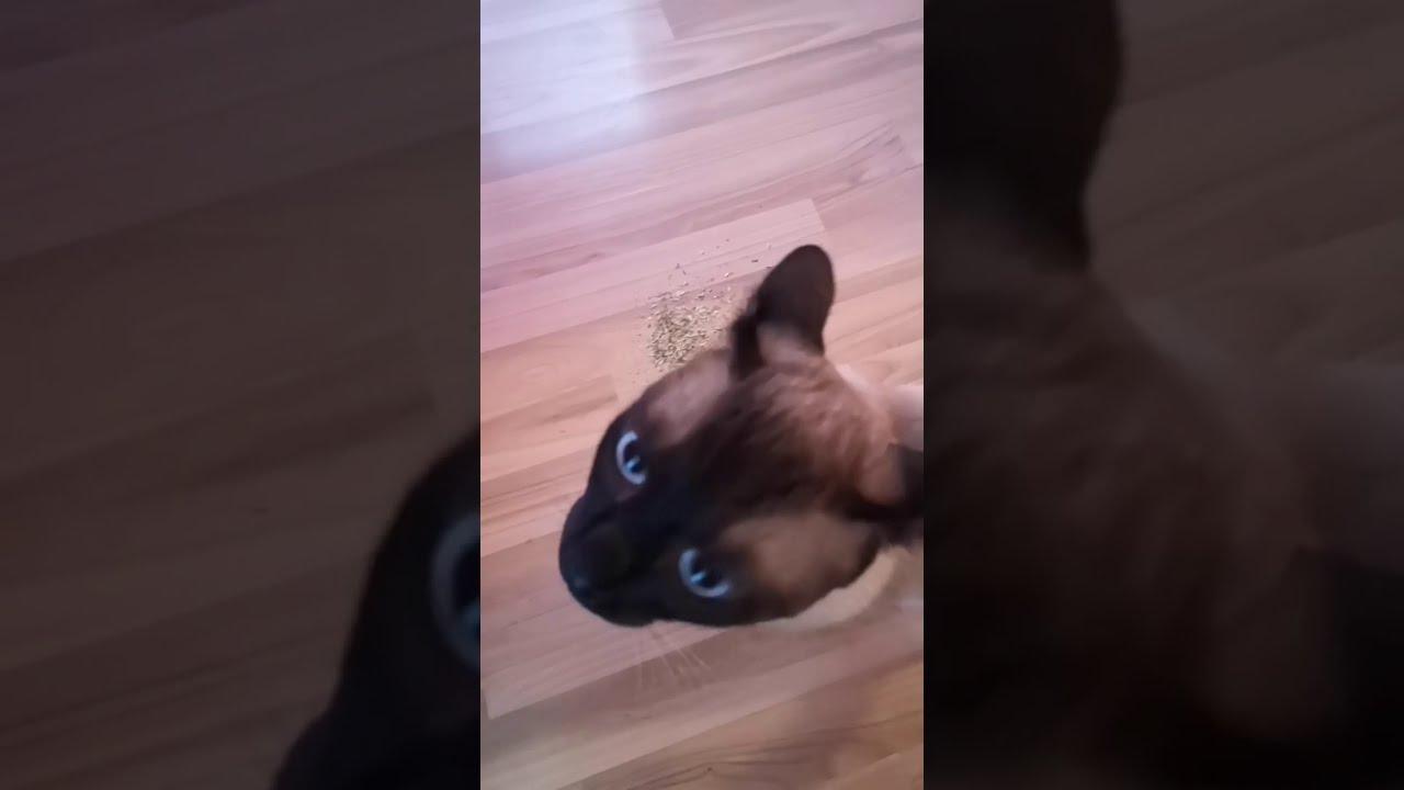 macska pukes férgek)