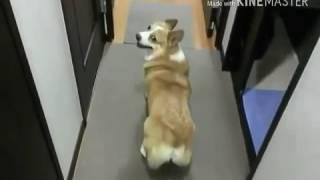 Собаки танцуют (между нами тает лед)