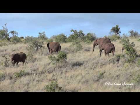 Creative Experiences: Elephants in Kenya
