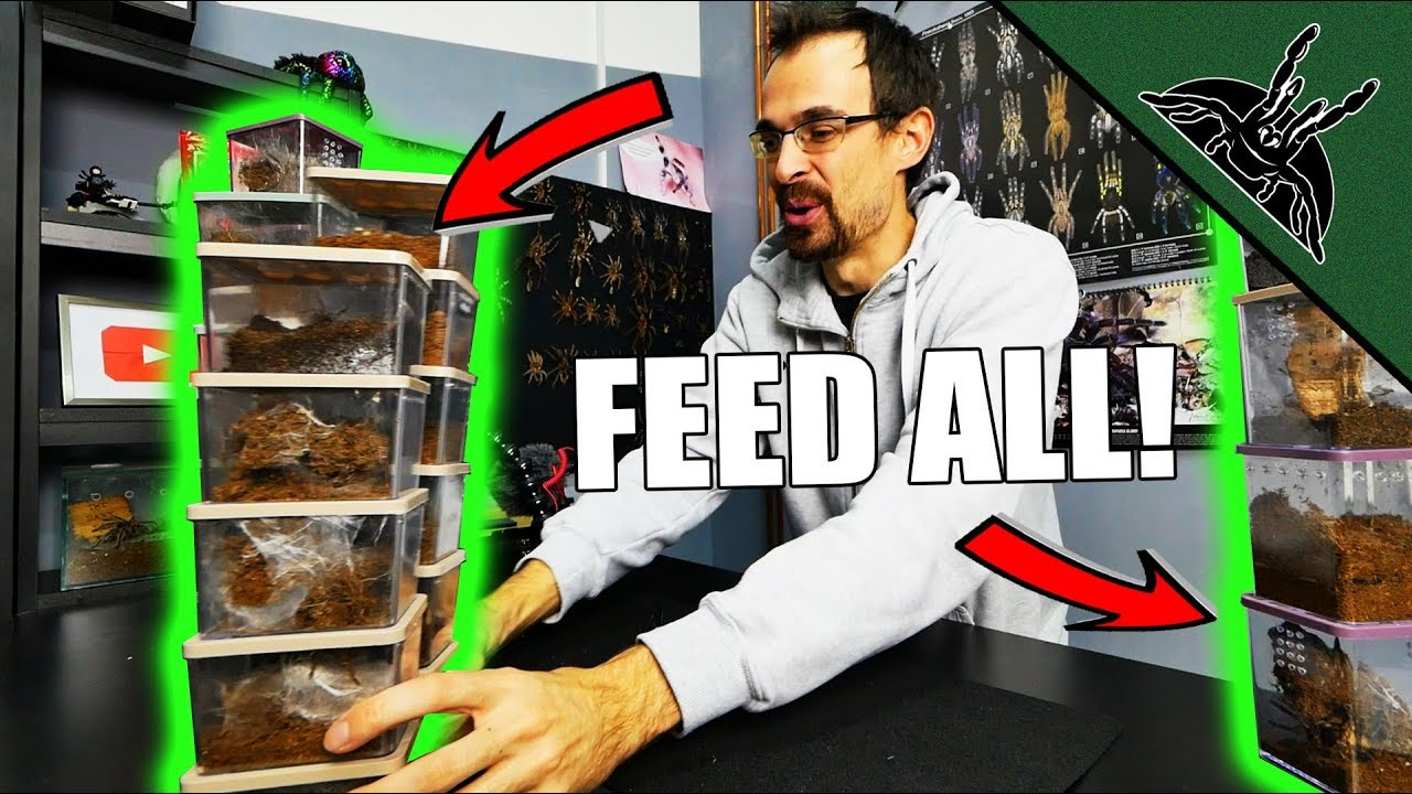 that-s-a-lot-of-enclosures-feeding-video