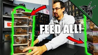 That's a LOT OF ENCLOSURES! Feeding video