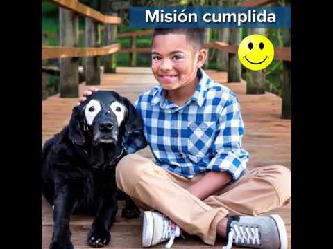 Un labrador con vitiligo ayudó a niño con la misma enfermedad