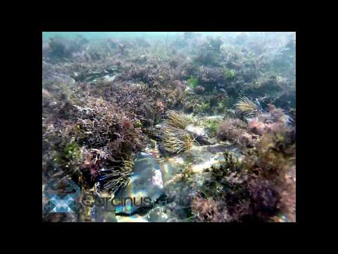 Marine ecology survey - Littoral Zone - Carcinus Ltd