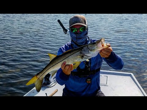 Snook Fishing In Cockroach Bay