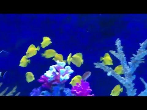 All colourful marine aquarium fish species