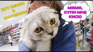 С котом вход разрешен! Кевин-путешественник | Распаковка | Посылка от подписчицы