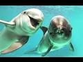 Delphinarium Nemo Minsk Delfine Seehund Robbe    Chiki Puki TV