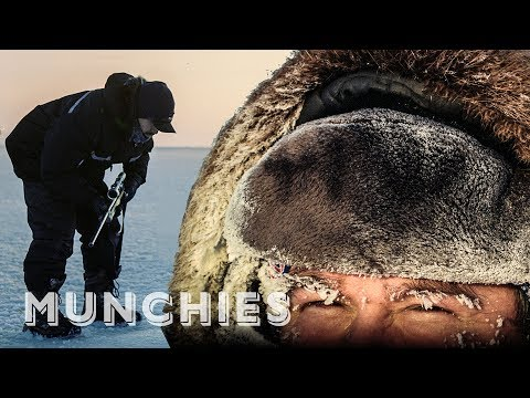 Canada's Controversial Seal Hunt: The Politics of Food