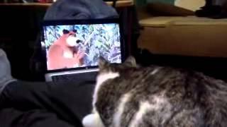 кошка смотрит мультик маша и медведь
