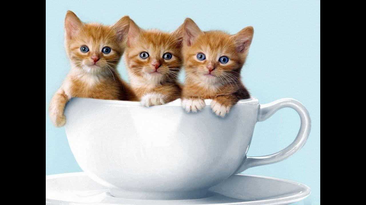 """Résultat de recherche d'images pour """"image trois  chat"""""""