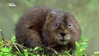Nat Geo Wild - Дикая природа Великобритании / Wild Great Britain 2 серия  Водоемы