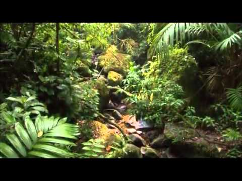 Amethystium - Arcus (Solefinger Remix) - Remixed by Dave Williams