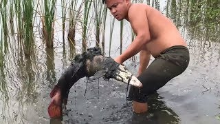Primitive Technology - Giant fish hunt - Eating delicious - Awesome  cooking fish in forest
