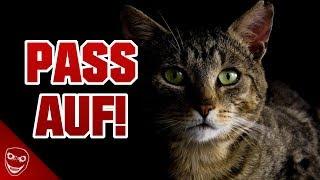 Wenn deine Katze dich anstarrt, solltest du dir Sorgen machen!