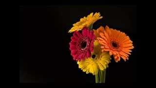 Des petits mots pour le plus beau des bouquets