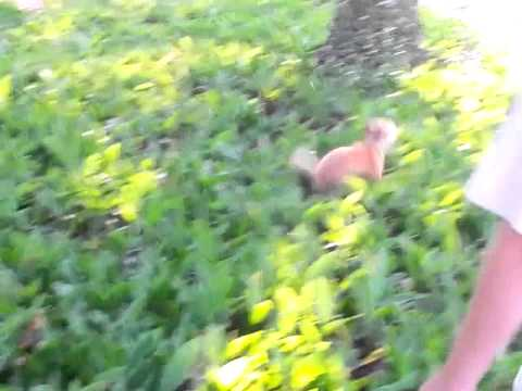 My Dog Hops Like A Bunny....when Chasing A Chipmunk