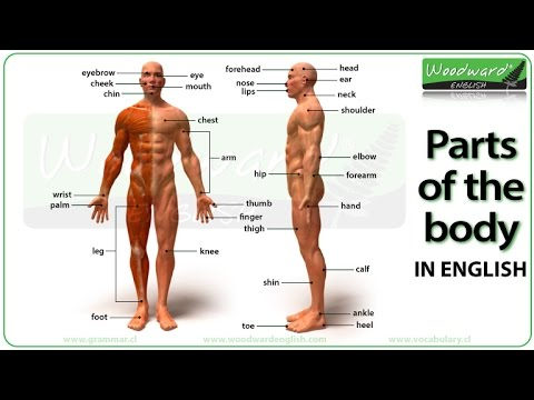 Parts of the Body Photos and English Vocabulary