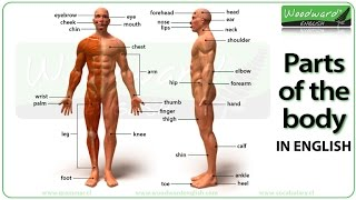 Parts of the body in English