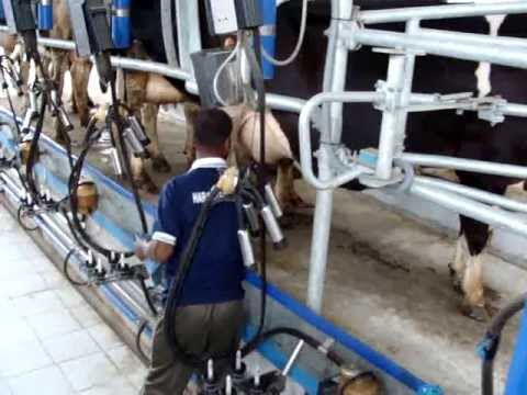 dairy fresh milk producer, milk products, milk plant in ludhiana punjab india www.haraagro.com