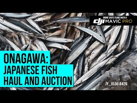 Japanese Fish Haul And Auction