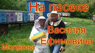 На пасеке Василия Ефимовича. Пчеловодство Молдовы