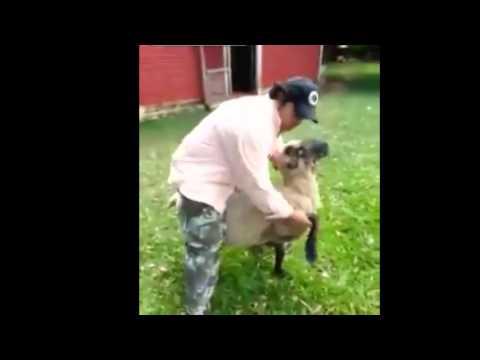 HMB while I ride this sheep