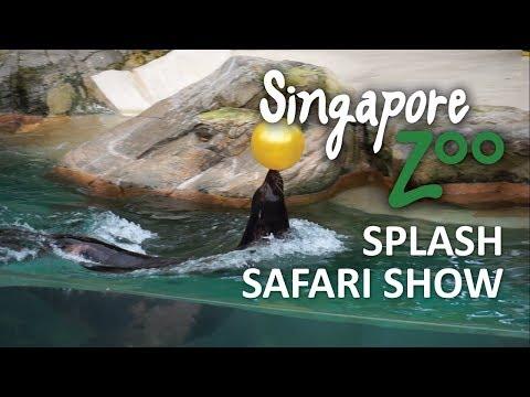 singapore-zoo-splash-safari-show-full-show-review-by-raees-rafael