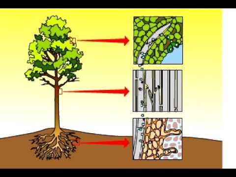 diagram for 5 gum casablanca fan remote wiring transpiration - youtube