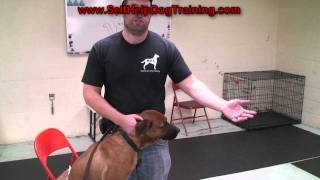 How To Clean Dog Ears - Tips From The Dog Training Guys (k9-1.com)