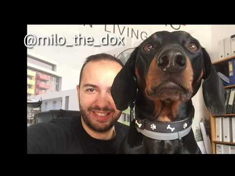 Doberman Pinscher Family Dog Pictures + Puppy Video + Subscriber Dog Special