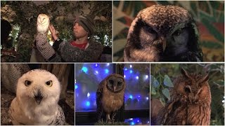 Would you dare to visit Tokyo's owl cafe?