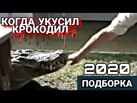 Когда Укусил Крокодил 2020  - ПОДБОРКА ВИДЕО НАПАДЕНИЕ  КРОКОДИЛА , УКУСЫ КРОКОДИЛА 2020