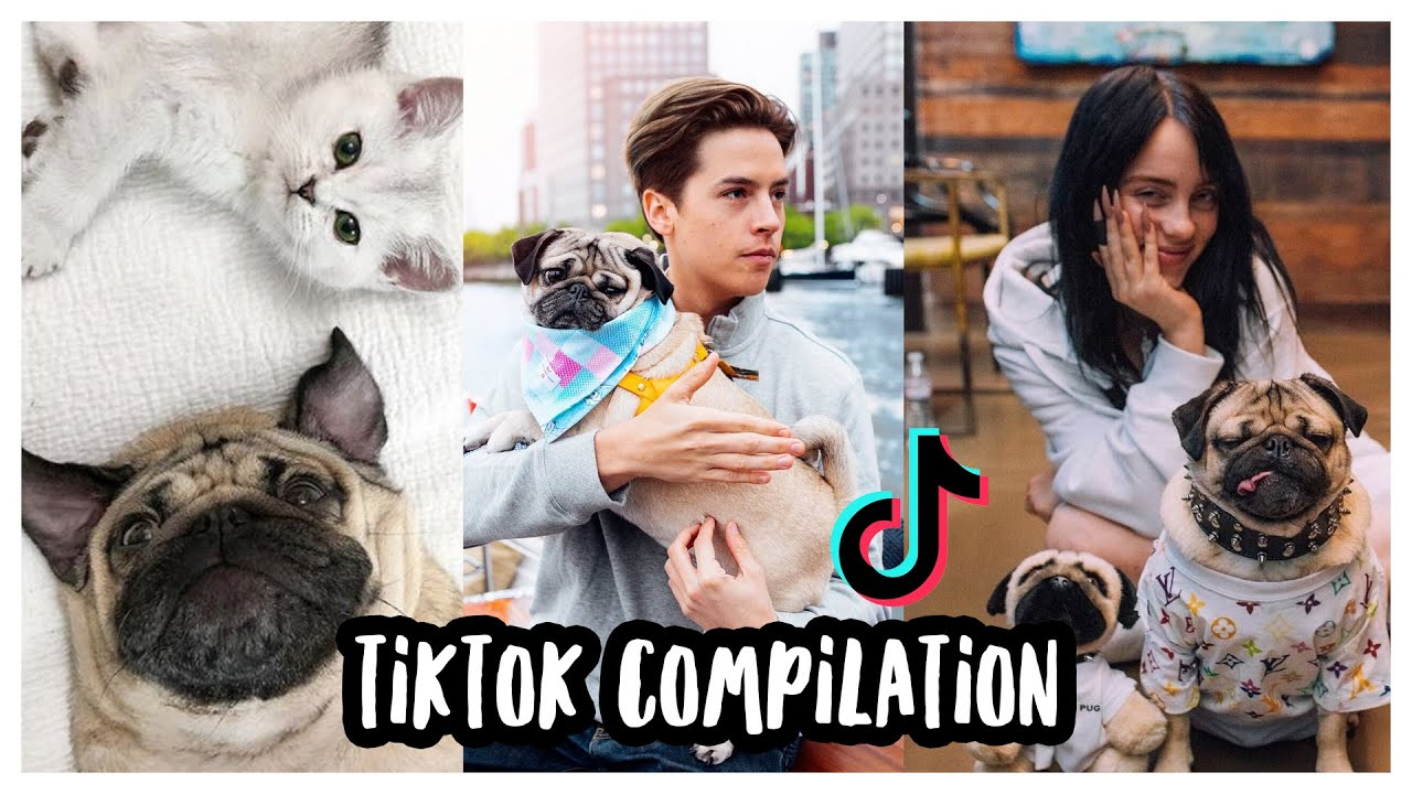 Doug The Pug's Best TikToks - Compilation