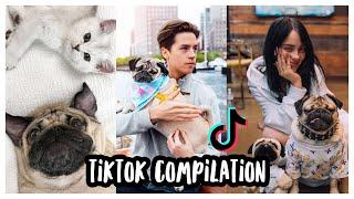 Doug The Pug's Best TikToks  Compilation