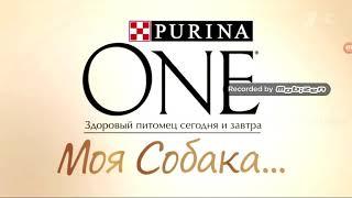 Реклама Purina one Моя Собака сухой и мокрий корм для маленьких собак?
