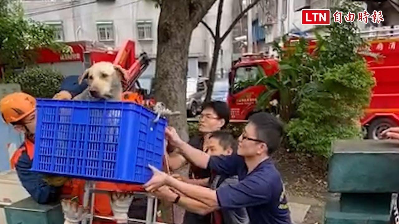 為救掉大排愛犬 7旬翁與狗雙雙受困