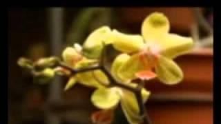 Esok Kan Masih Ada by. Utha Likumahua