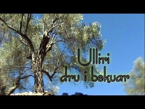''Ulliri - dru i bekuar'' - Ulqin - reportazh