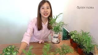 공부방 수경식물 추천, 화장실에 놓을 수경식물추천!