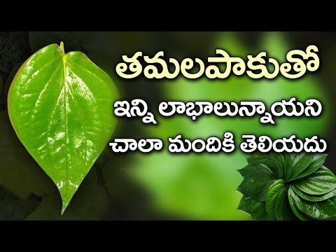 Amazing Health Benefits of Betel Leaves | Best Health Tips | Health Facts Telugu