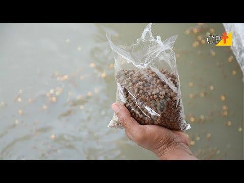 Clique e veja o vídeo Manejo Alimentar na Piscicultura - Curso Nutrição e Alimentação de Peixes