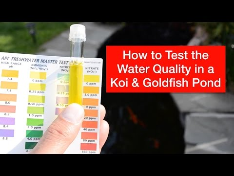 How To Test The Water Quality In A Koi & Goldfish Pond