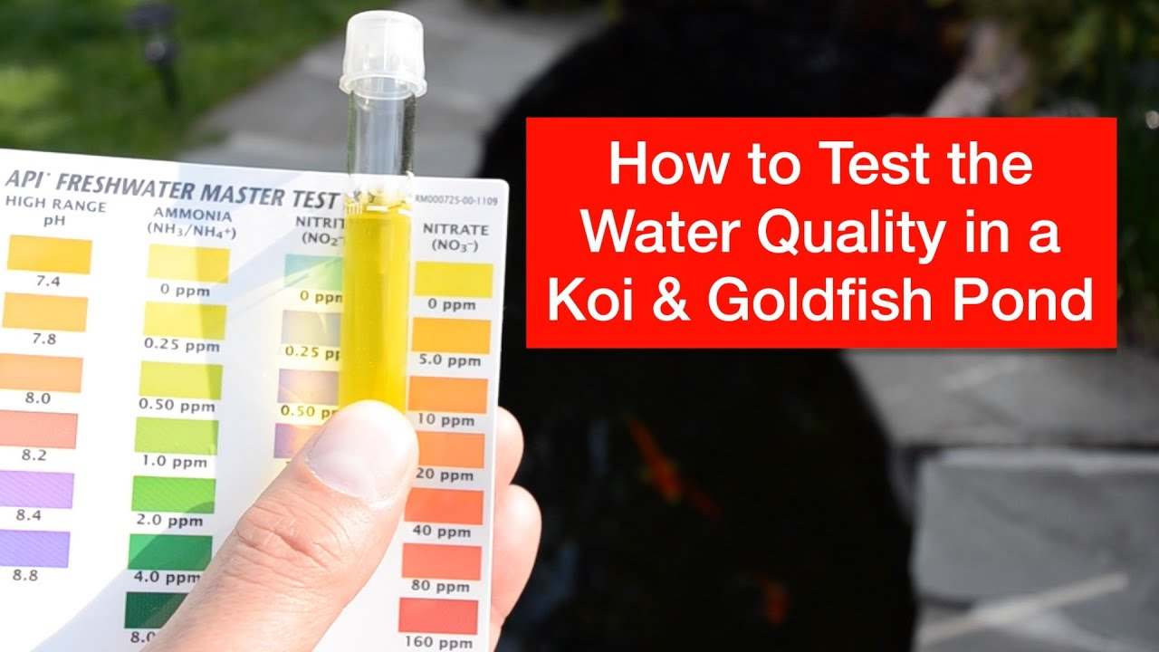 How to test the water quality in a koi goldfish pond for Koi pond water quality