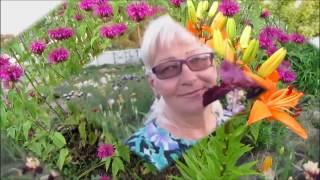 Многолетники, цветы моего сада, дача - 2016.(Многолетники, цветы моего сада, дача - 2016. Короткие сюжеты с моими цветами, растениями, рассказываю о моей..., 2016-12-03T15:29:18.000Z)