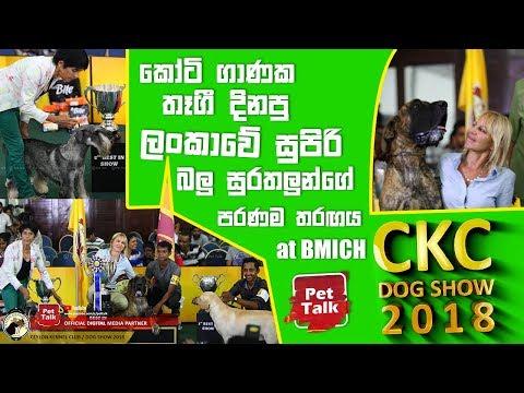 කෝටි ගාණක තෑගී දිනපු ලංකාවේ සුපිරි බලු සුරතලුන්ගේ පරණම තරඟය | CKC Dog Show 2018 at BMICH | Pet Talk